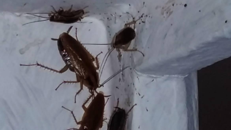Photo de blattes et cafards dans un coin de pièce