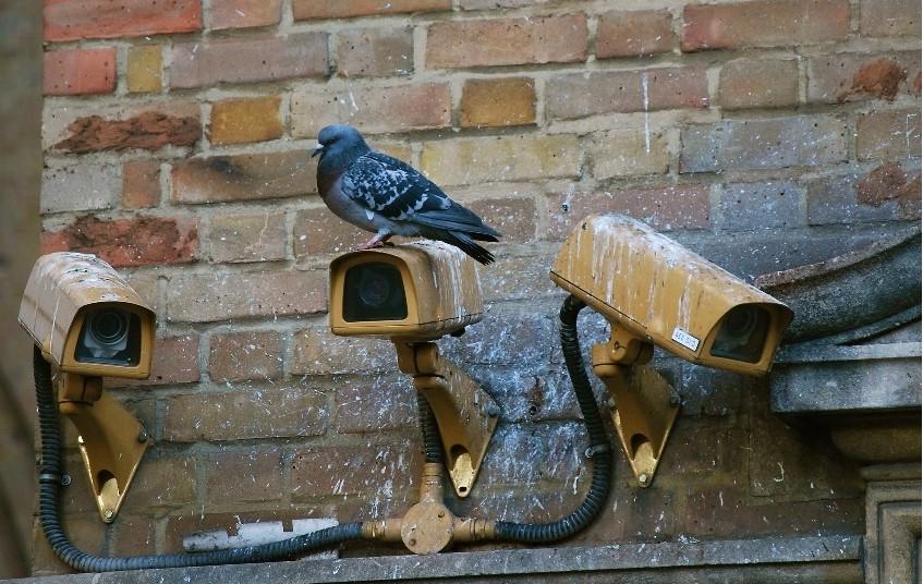 Pigeons sur des caméras de surveillances en milieux urbain sur le point d'être traités par BEN4D.