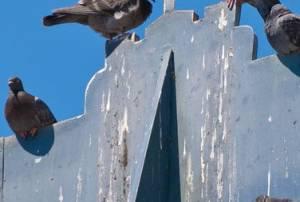 Photo d'une facade salie par des pigeons. Dépigeonnage à prévoir.